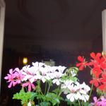 Цветочки на окнах