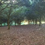 The macadamia orchard