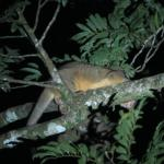 Animal from Night Rain Forest Tour