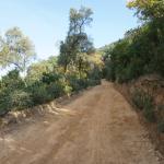 Pista forestal de acceso