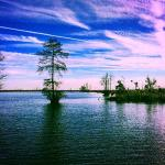 Great Dismal Swamp National Wildlife Refuge Foto