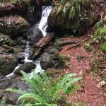 Trillium Falls Hike