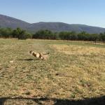De Wildt Shingwedzi Cheetah Ranch