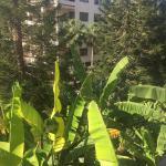 Atlantica Gardens Hotel Foto