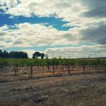 Barossa Valley Wine Tasting Tours Foto