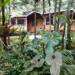 Casa Verde in the cloud forest