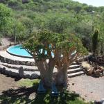 Otjitotongwe Cheetah Park - 5