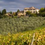 Vy över vinodlingarna och gården
