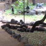 Resident monkeys