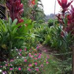 Maui Tradewinds Foto