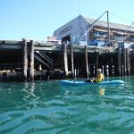 kayak under the dock to see the sea lions up close and personal