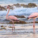 Visit the creek and take some great shots of the flamingos in season..
