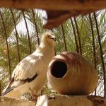 zoo du sahara