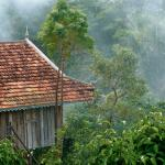 Photo de Tree Top Bungalows