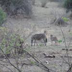 Zebras spotting from our balcony