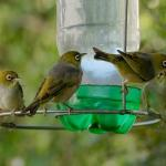 Birds are frequent visitors to our garden