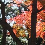 Asukayama Park Foto