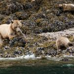 Sea Wolf Adventures - Day Tours