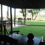 Buckler's Africa Foto