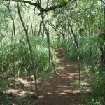 Ehukai Pillbox Hike