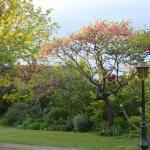 vue du jardin côté parc
