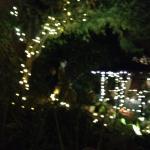 Magical tree lights