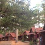 Tall Pines Inn Foto