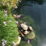 Turtles at Lake 2