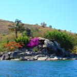 The bar hidden amongst rocks and flowers
