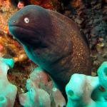 Eels don't mind getting their pic taken.