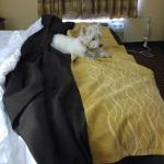 Foto de Comfort Inn Mechanicsburg/Harrisburg - South