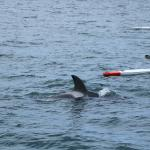 Our boat patiently waits for the orca whale to come up to water