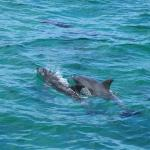 Over 50+ dolphins were spotted during the tour