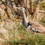 Savute Reserve Foto