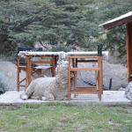 Una de las mascotas del camping