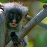 Jozani Forest Reserve Foto
