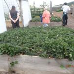 The Kitchen Garden - personal tour by one of the chefs