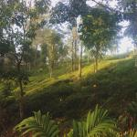 Landscape - Tea Forest Lodge Guesthouse Photo