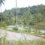 Uitzicht rijstvelden