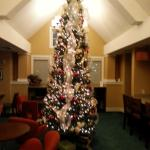 tree in the lobby