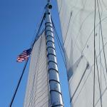 Foto de Yacht America Whale Watching