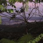 View of the valley at sunrise through the Cecropia trees