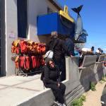 Foto de Southern Spirit Cruises (Whale watching)