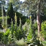 Jardin Botanique du Beau Pays