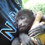 beautiful baby monkey in my arms!