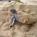 Programa Tato (Observacao de tartarugas marinhas)