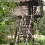 Tree house in the campus