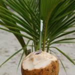 Rum coconuts yeee haaaa!!