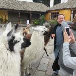 The hacienda has  a group of Llama that come into the courtyard to greet you!