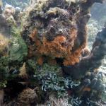 Reef scene.